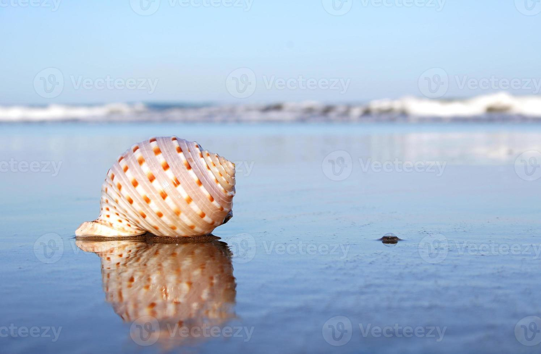 concha de playa foto