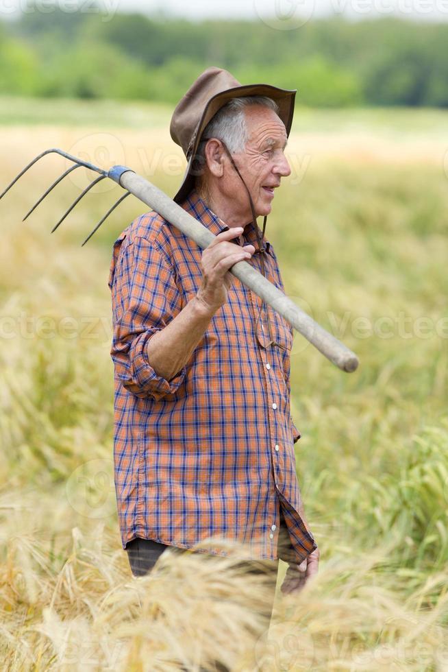 Old man in barley field photo
