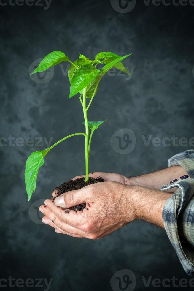 Hands holding a plant growing photo