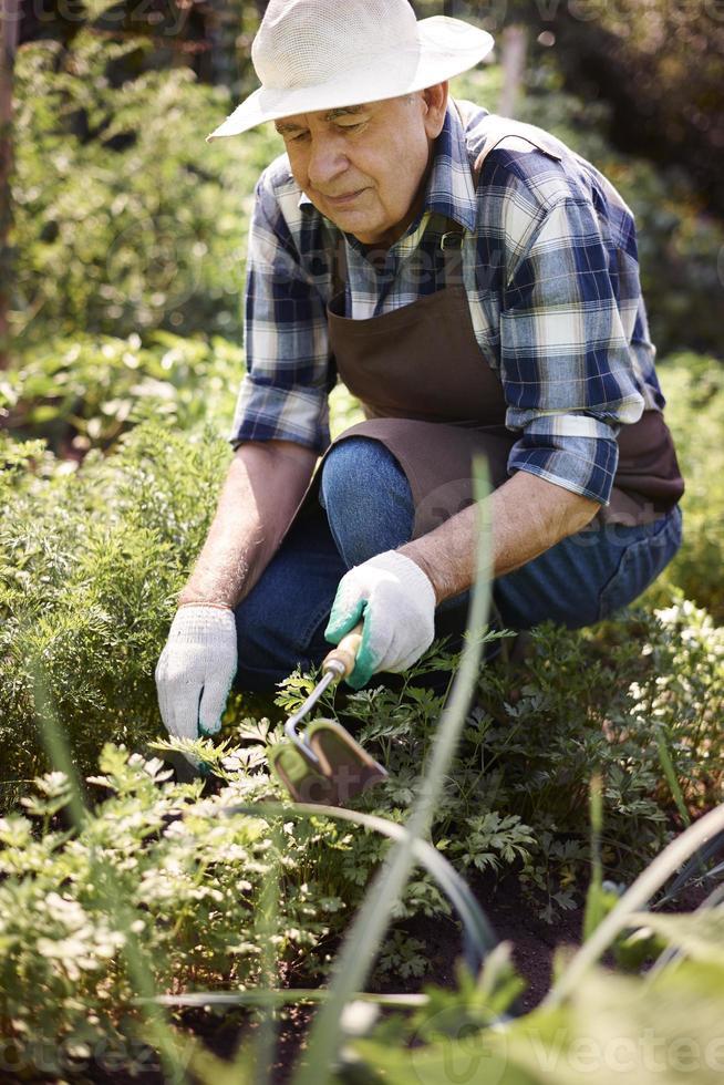 Senior hombre trabajando en el campo foto