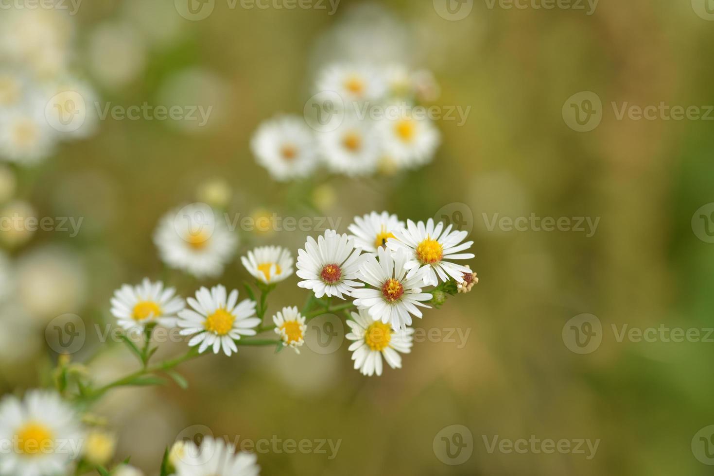 flor blanca foto