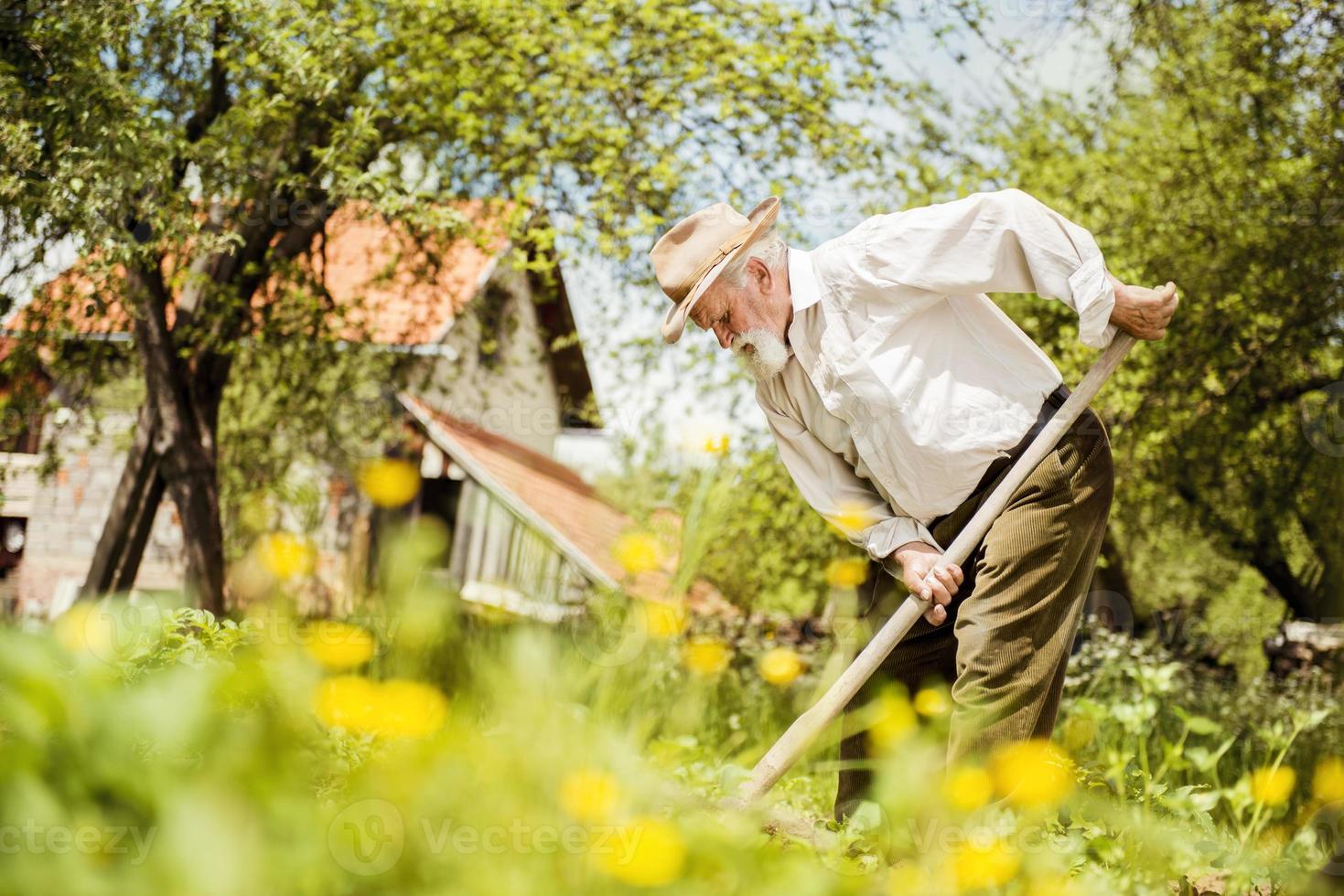 viejo granjero en el prado foto
