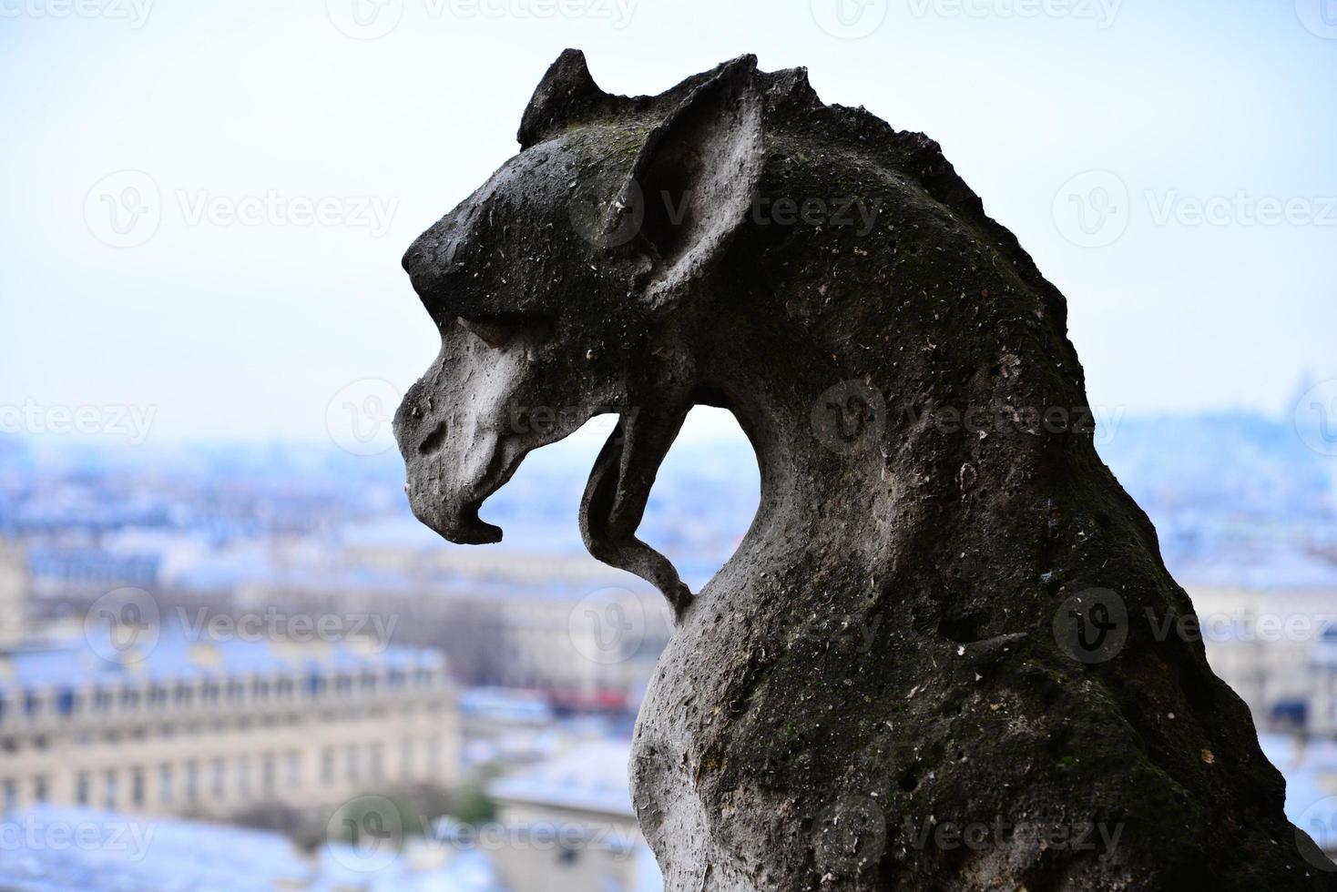 Gargoyle at Notre Dame photo