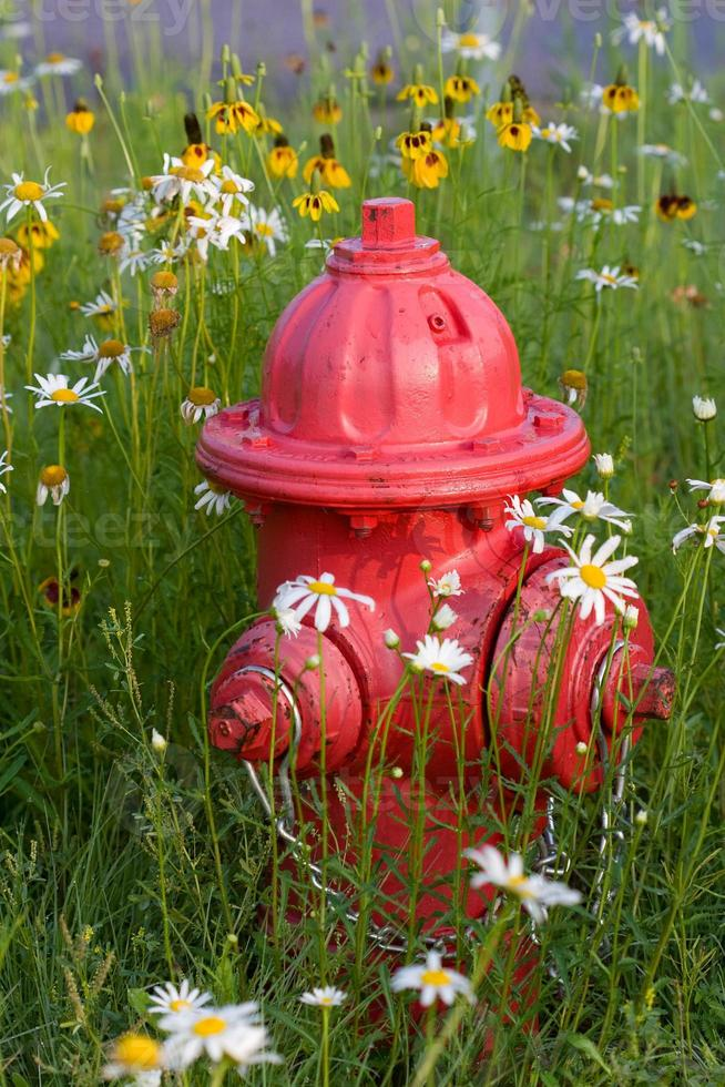 fire hydrant among wild flowers photo