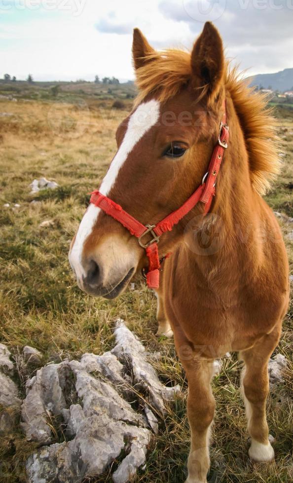 caballos, guadamia, asturia y cantabria, españa foto
