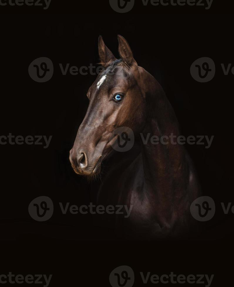 Akhal-Teke horse photo