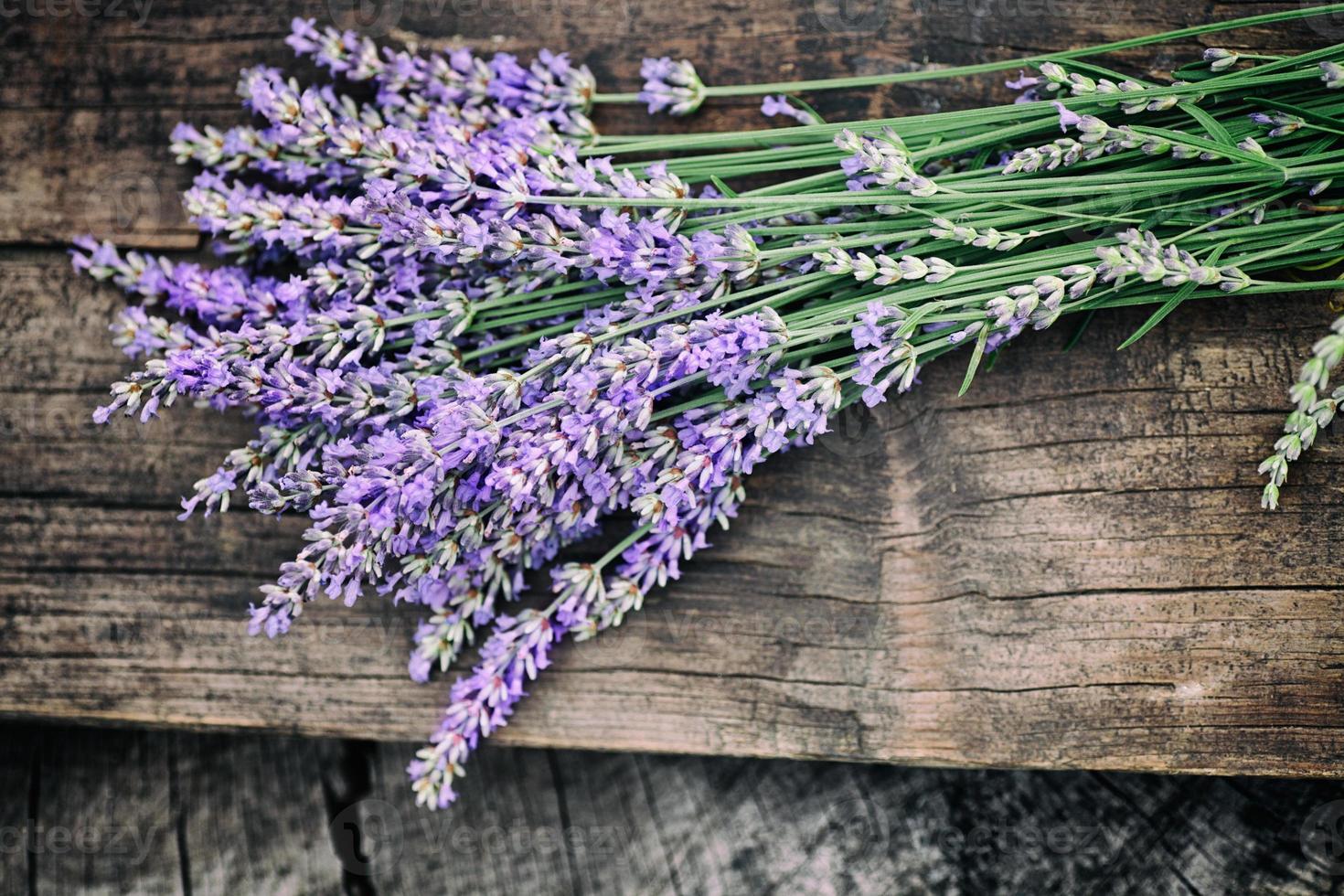 Fresh lavender photo