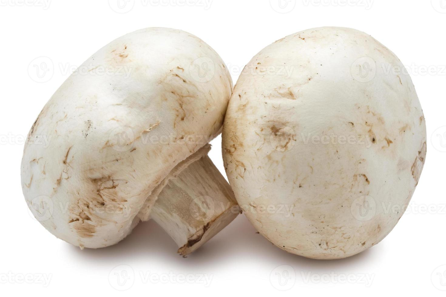 Champignon mushrooms photo