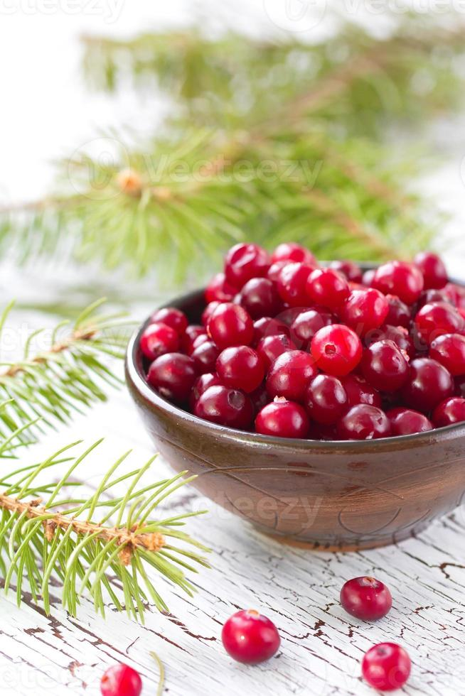 Fresh cranberry in a bowl photo