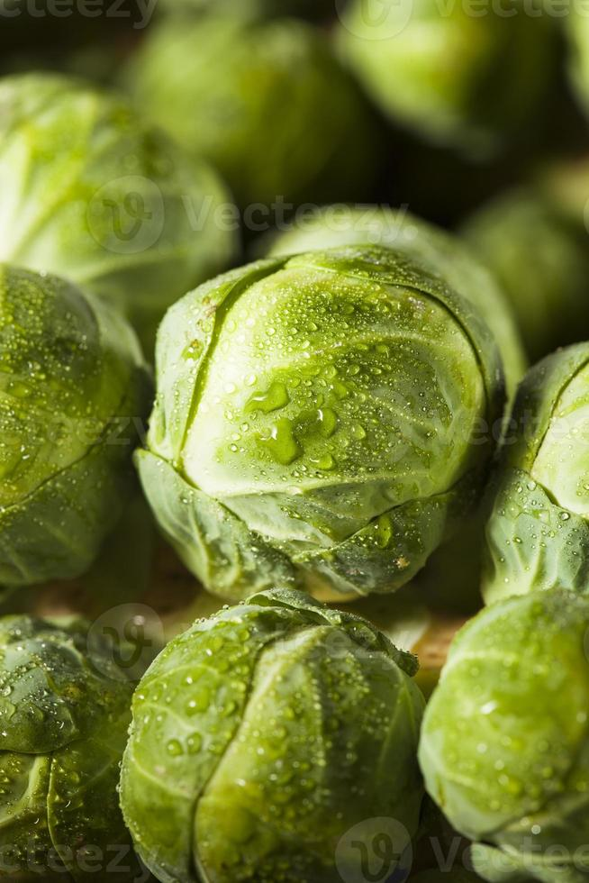 Raw Green Organic Brussel Sprouts photo