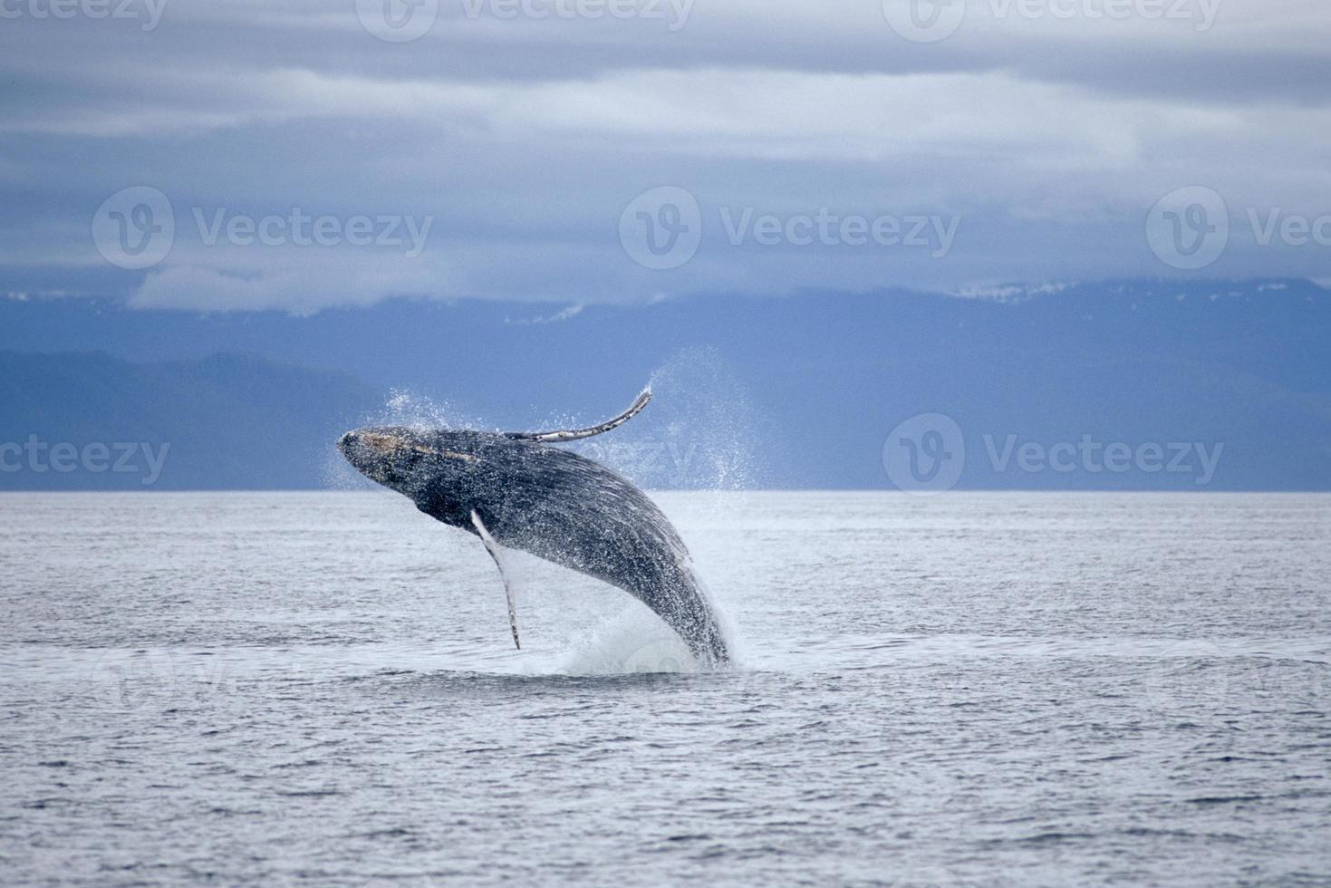 una ballena saltando sobre el océano foto