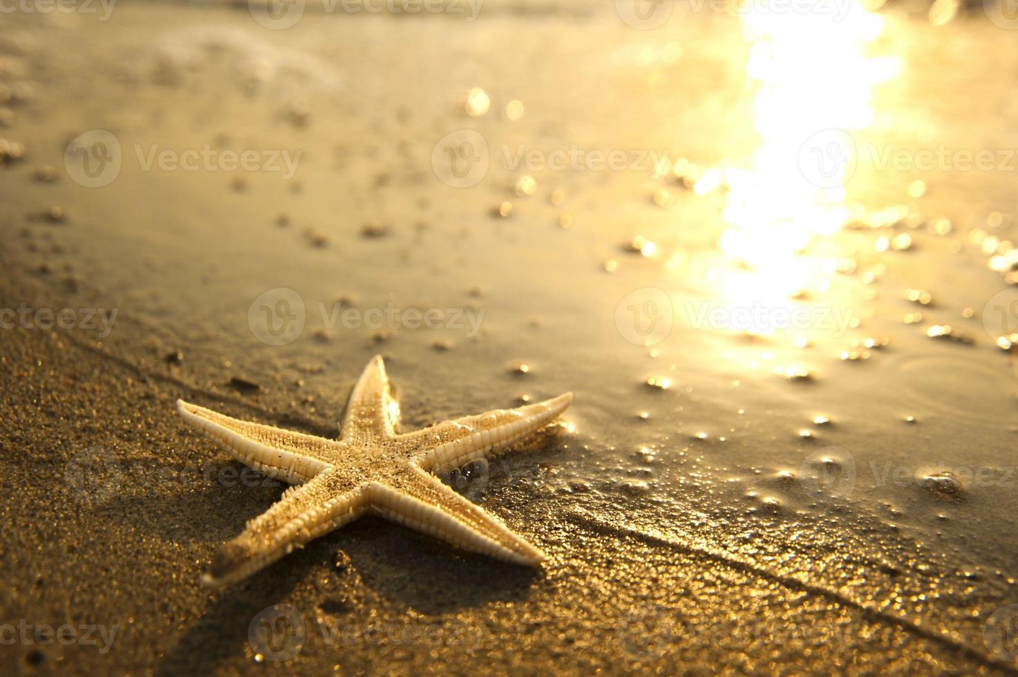 estrella de mar junto a la playa foto