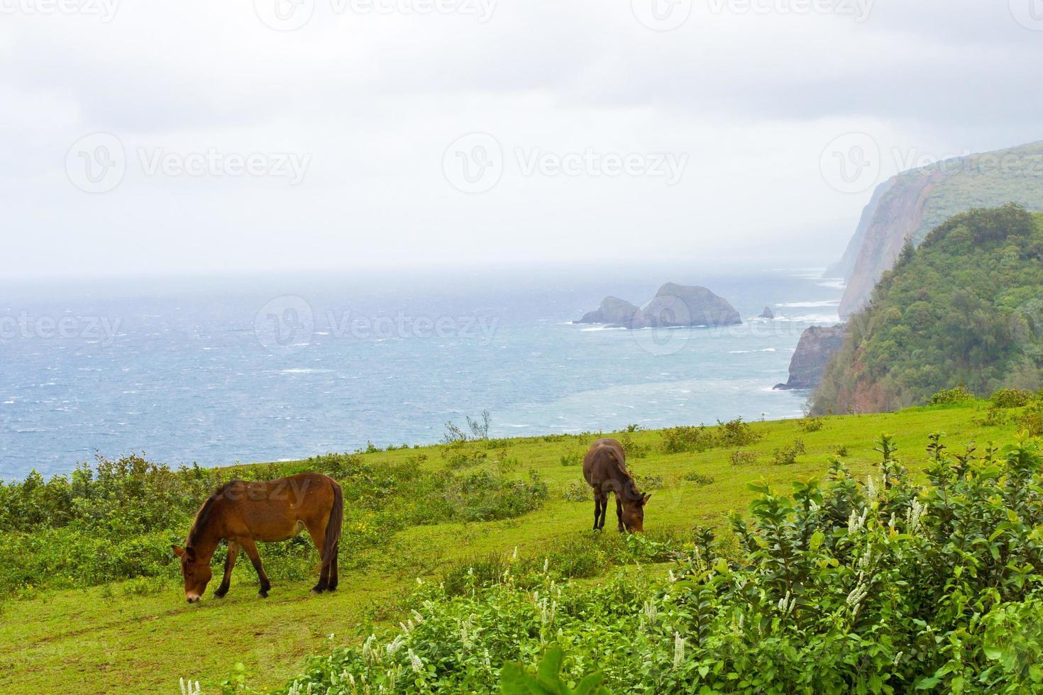 Big Island Hawaii landscape with ocean mist and horses photo