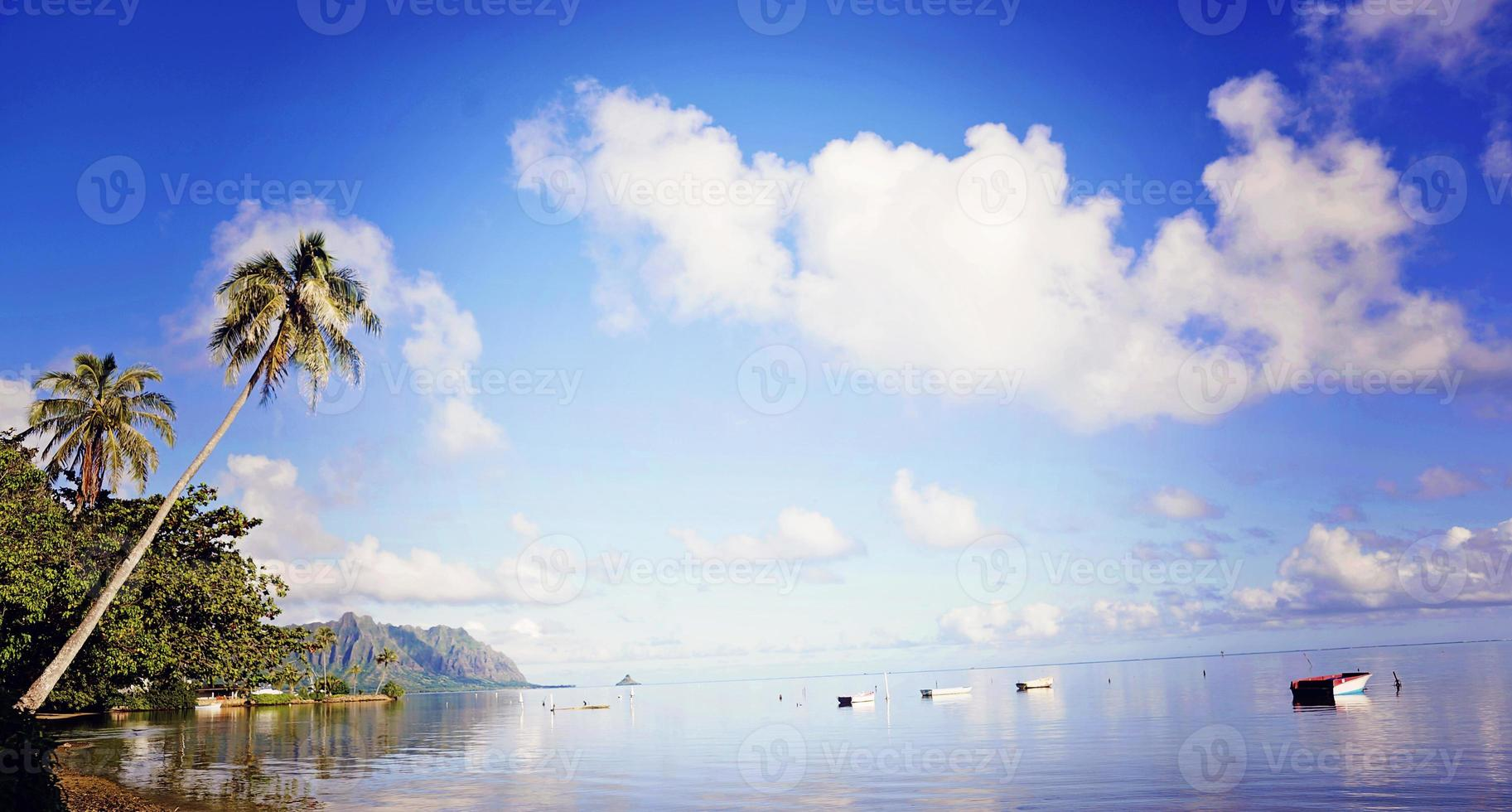 Palm Trees and Row Boats photo