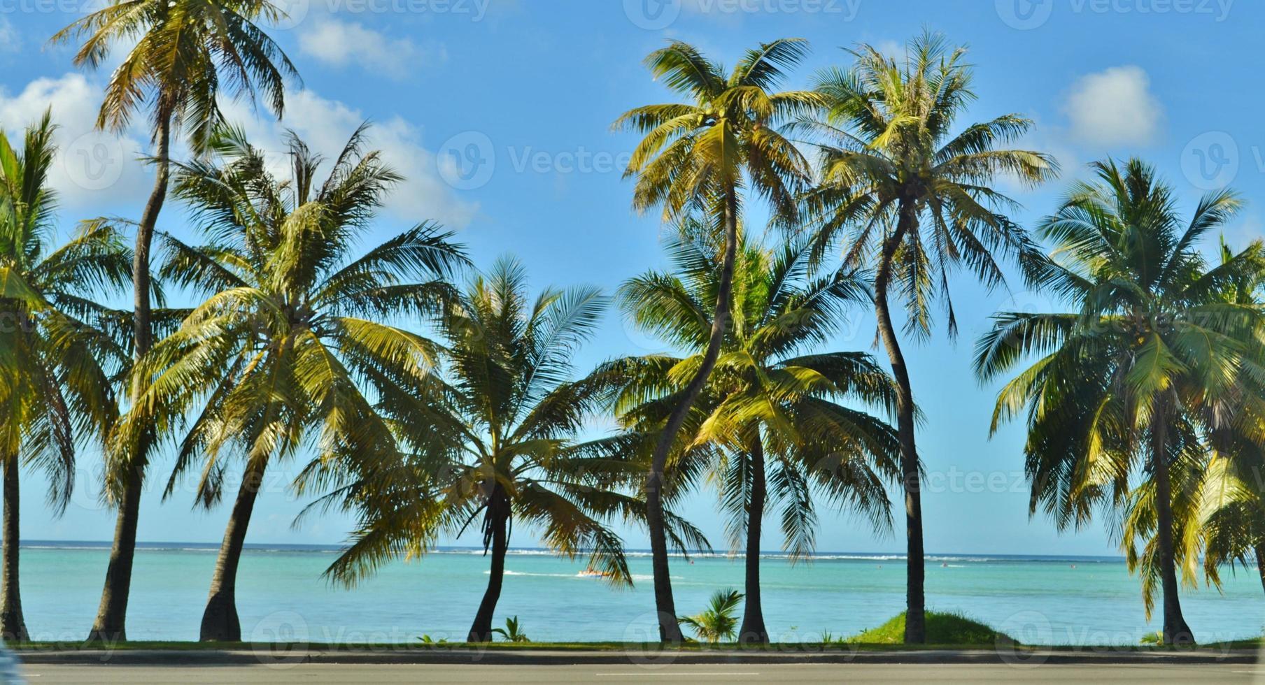 palmeras en un paraíso tropical foto