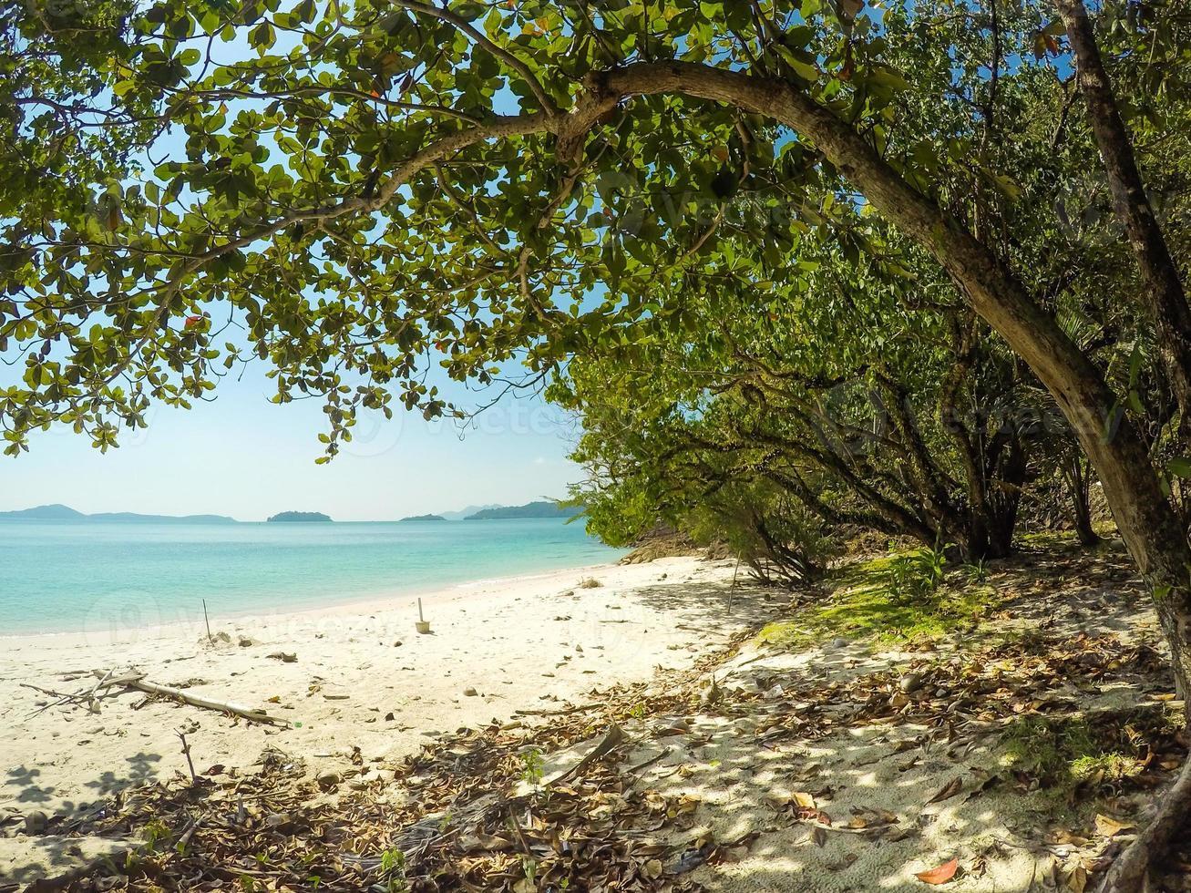 árbol con playa foto