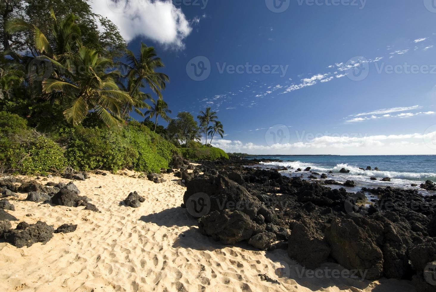 Tropical beach with palm trees, golden sand and volcanic rock photo