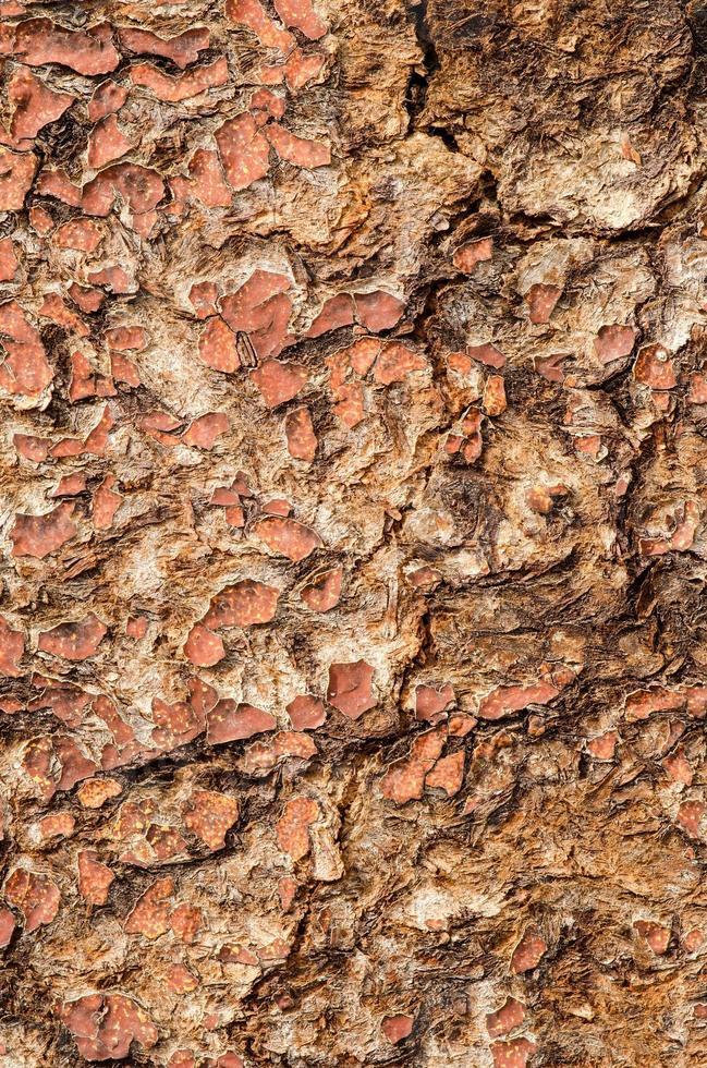 superficie de madera rajada. foto