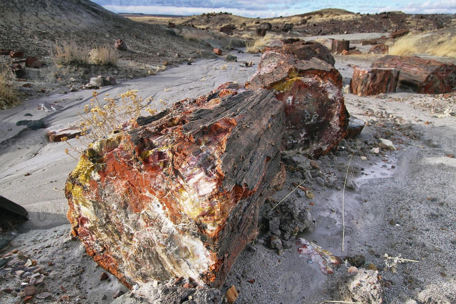 Petrified wood of triassic period in Petrified Forest photo