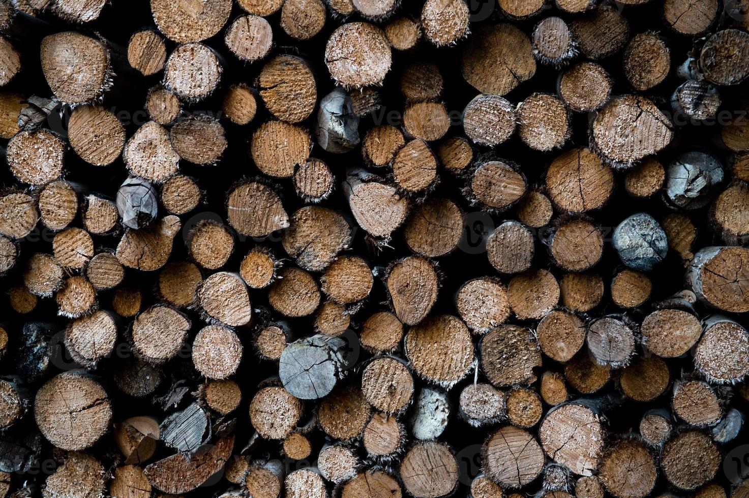 troncos de árboles apilados foto