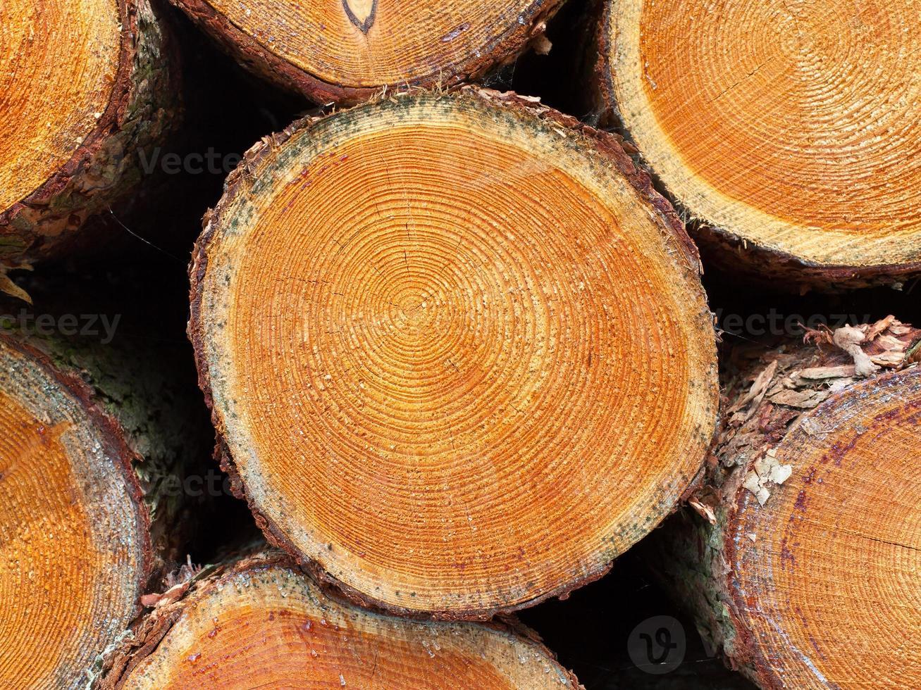madera apilada en un bosque holandés foto