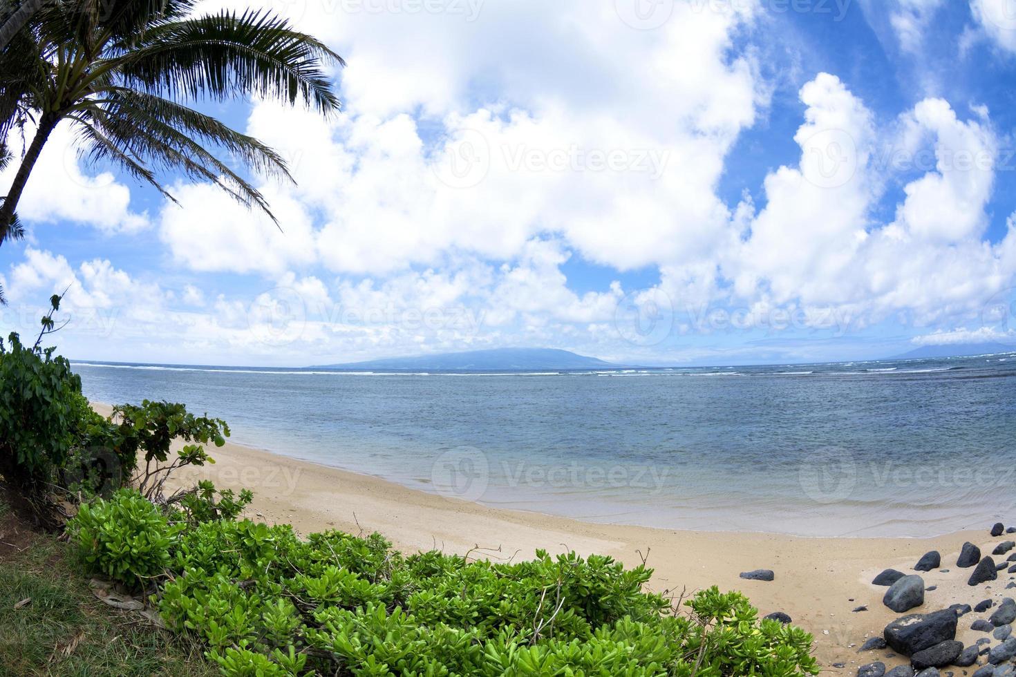 Hawaiian tropical beach photo