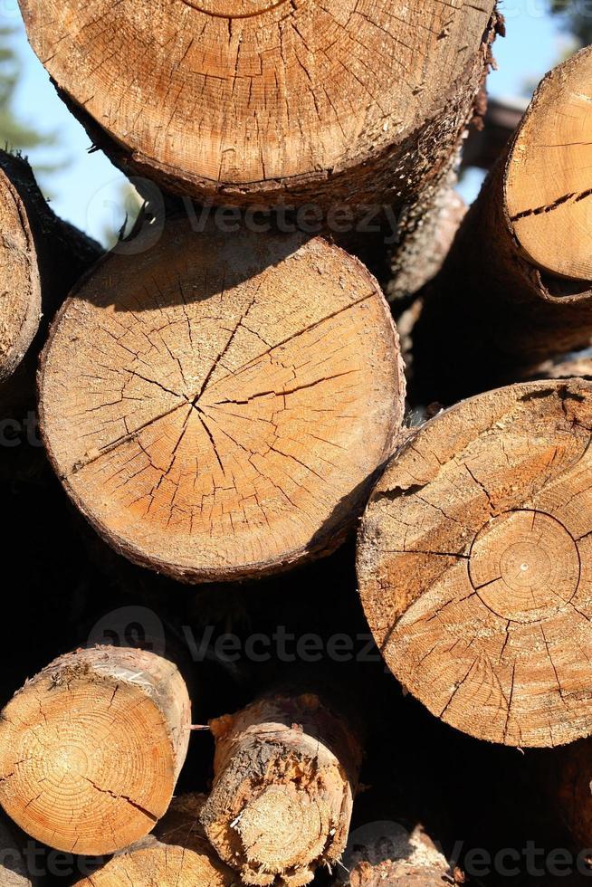 cortar troncos foto