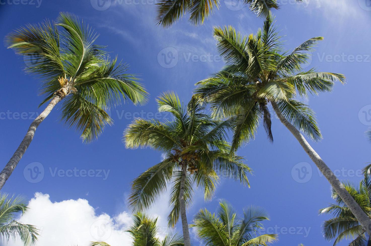 palmeras foto