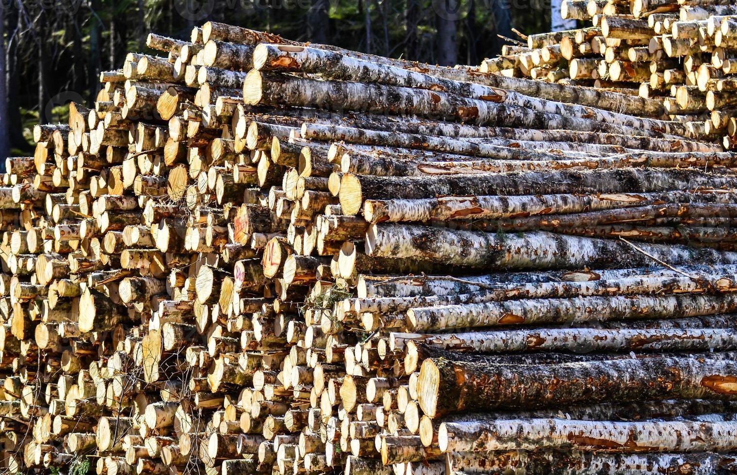 pila de troncos foto
