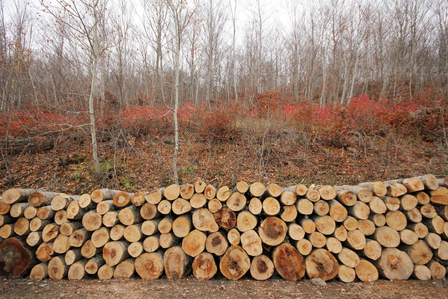 stock de madera foto