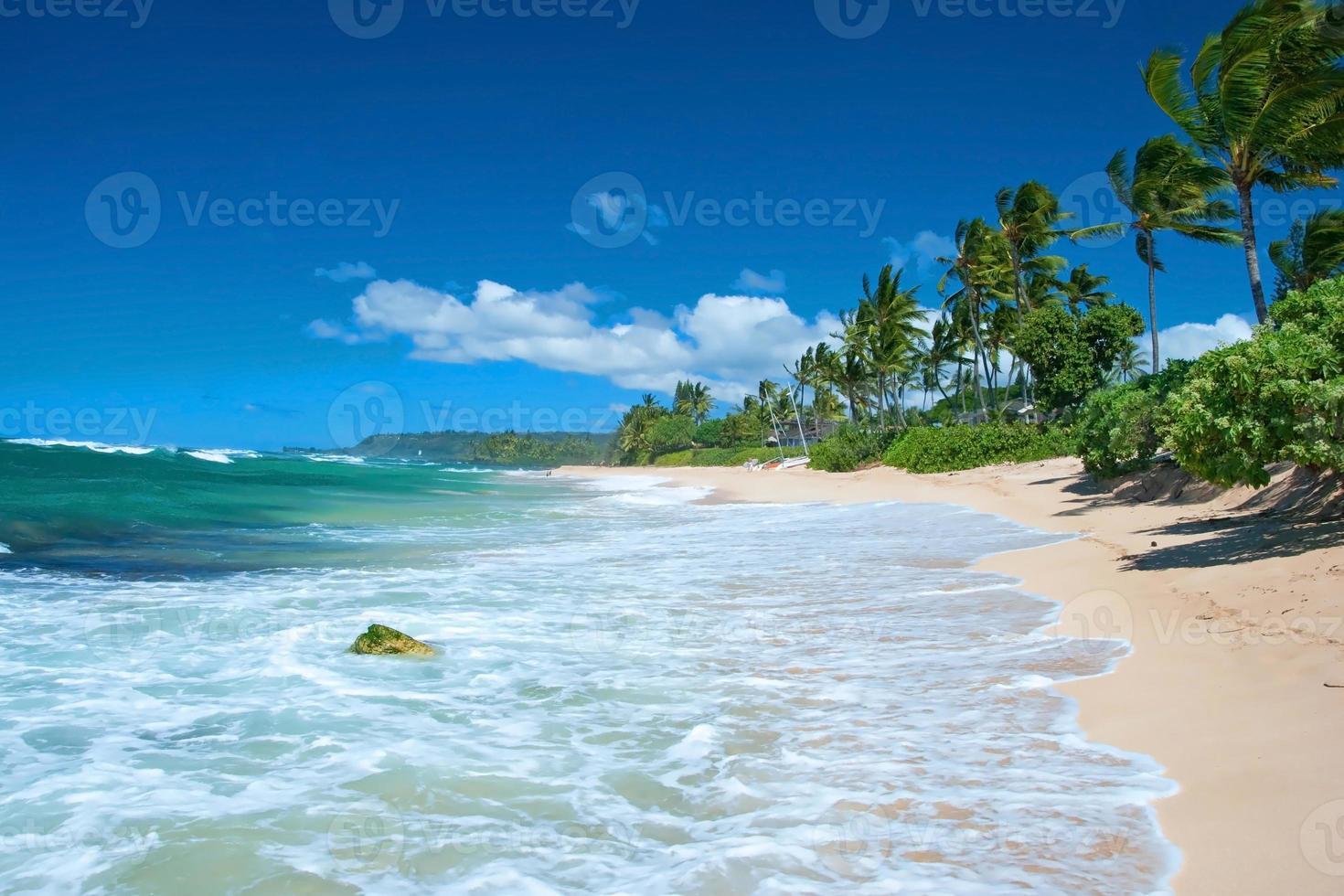 Playa de arena virgen con palmeras y océano azul foto