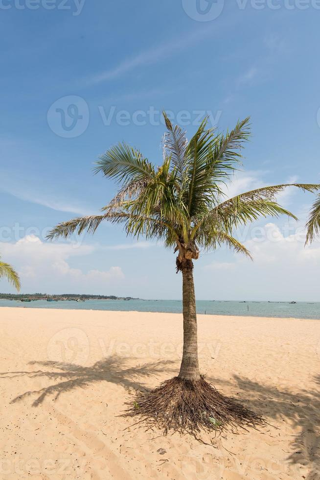 beach fringed with palm trees photo
