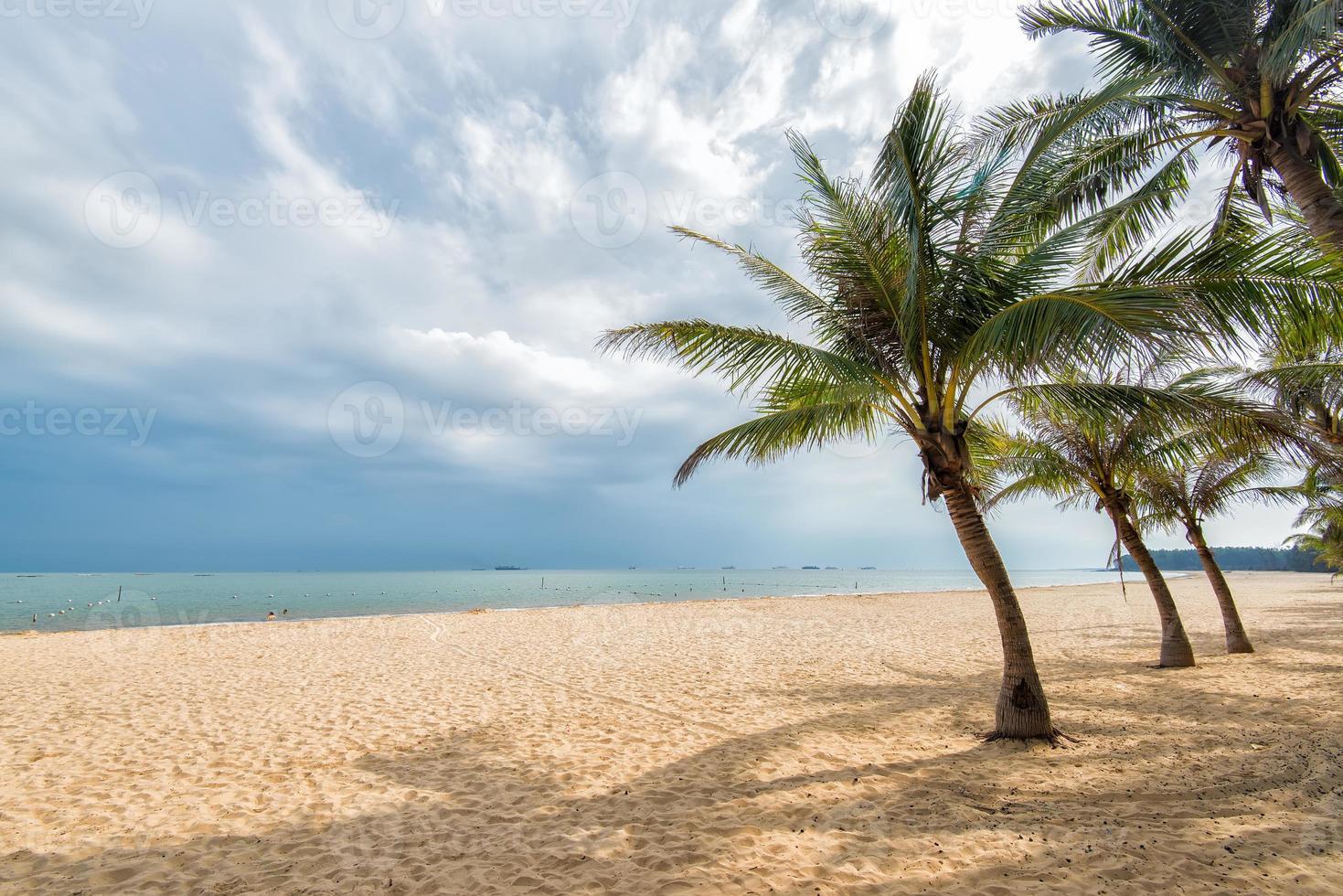 playa bordeada de palmeras foto