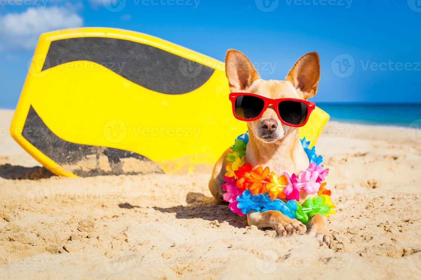 perro surfista foto