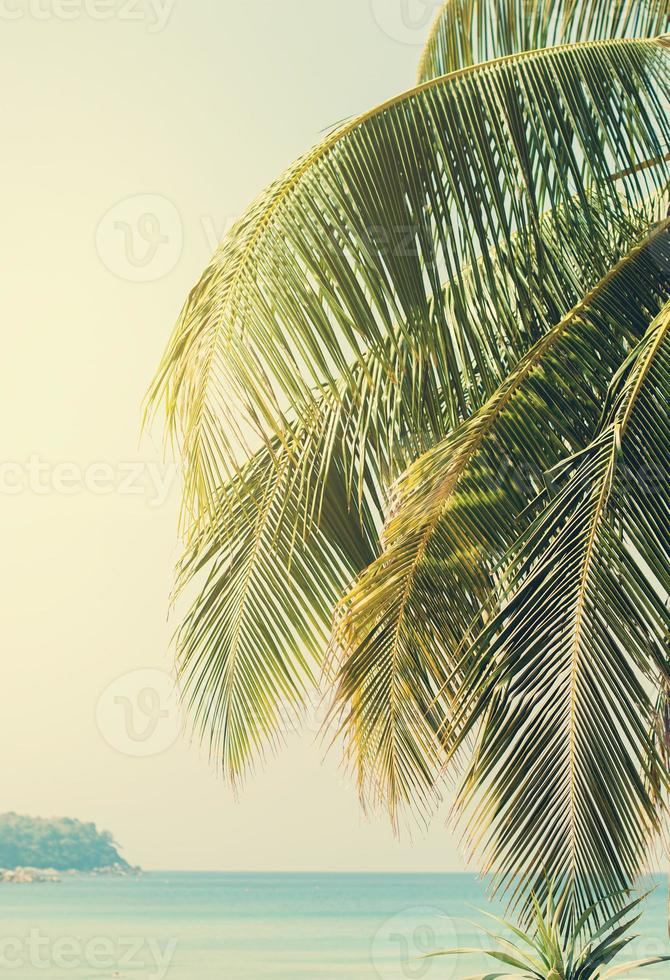 Palm branches against the sea photo