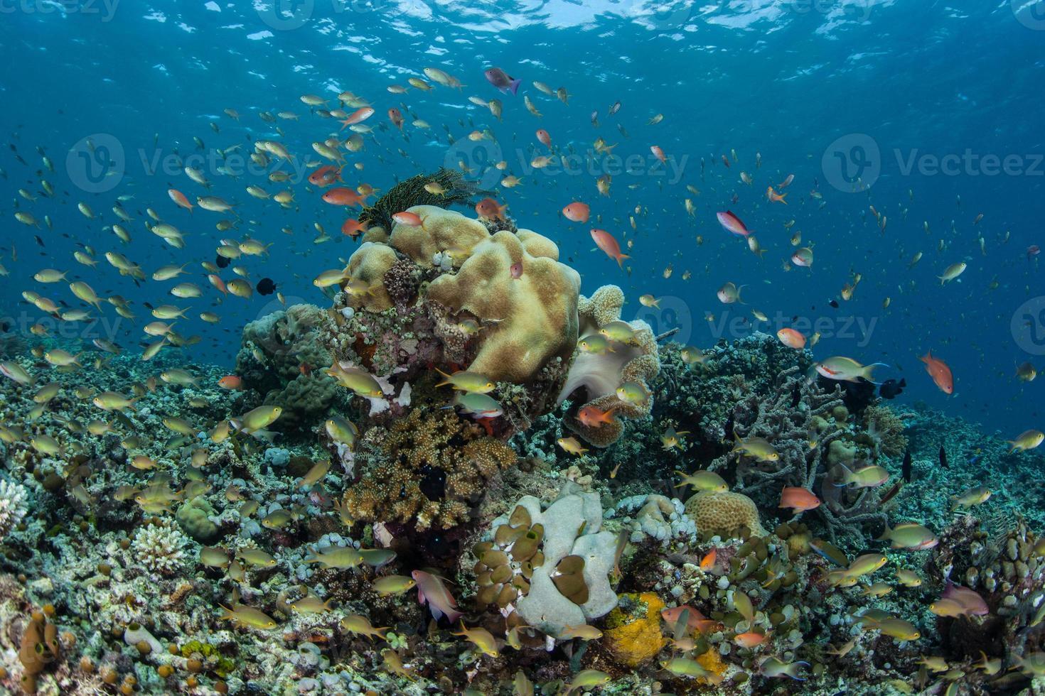 Vibrant Reef Fish photo