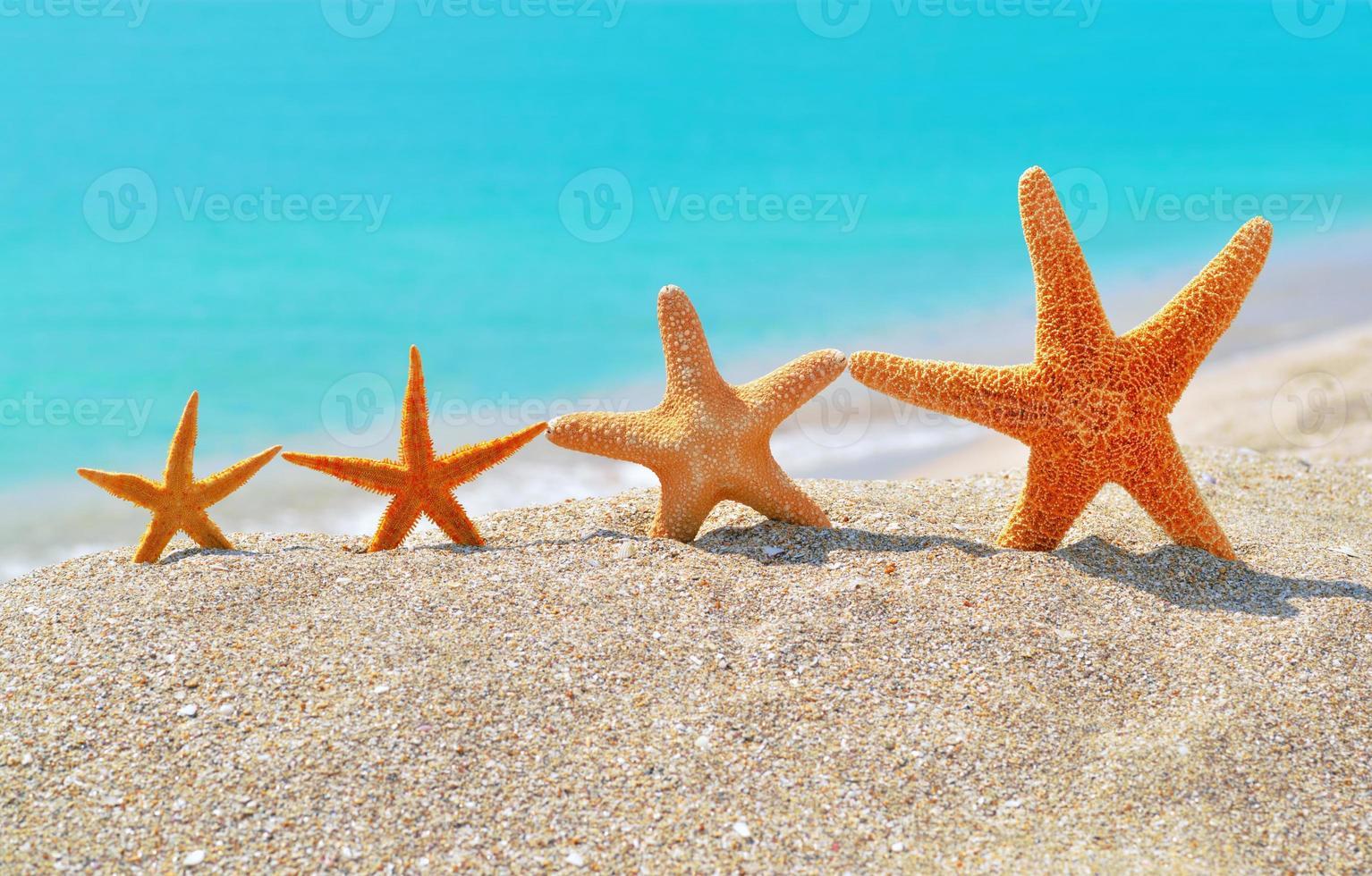 Starfishes on the beach photo