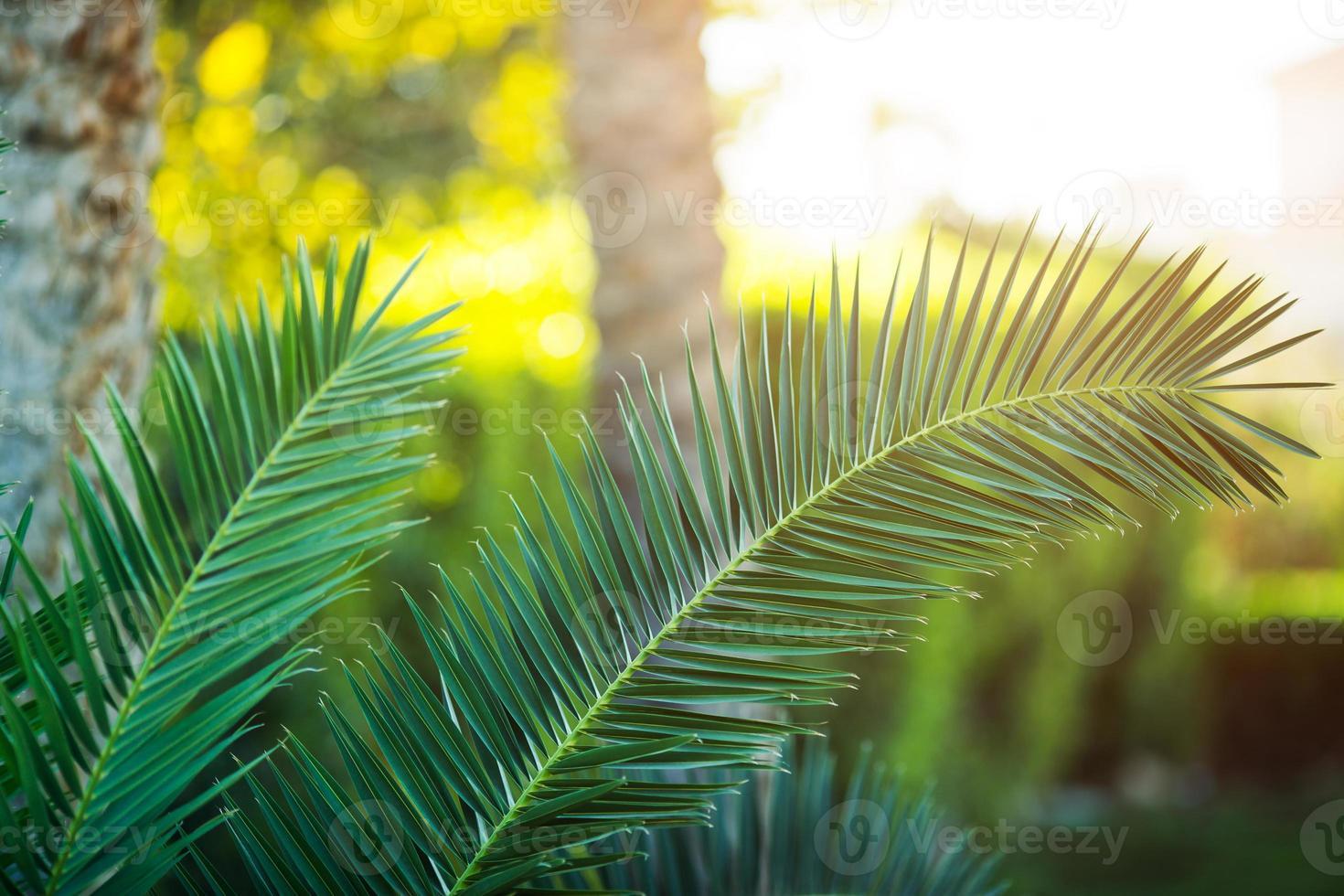 Tropical palm tree close-up photo