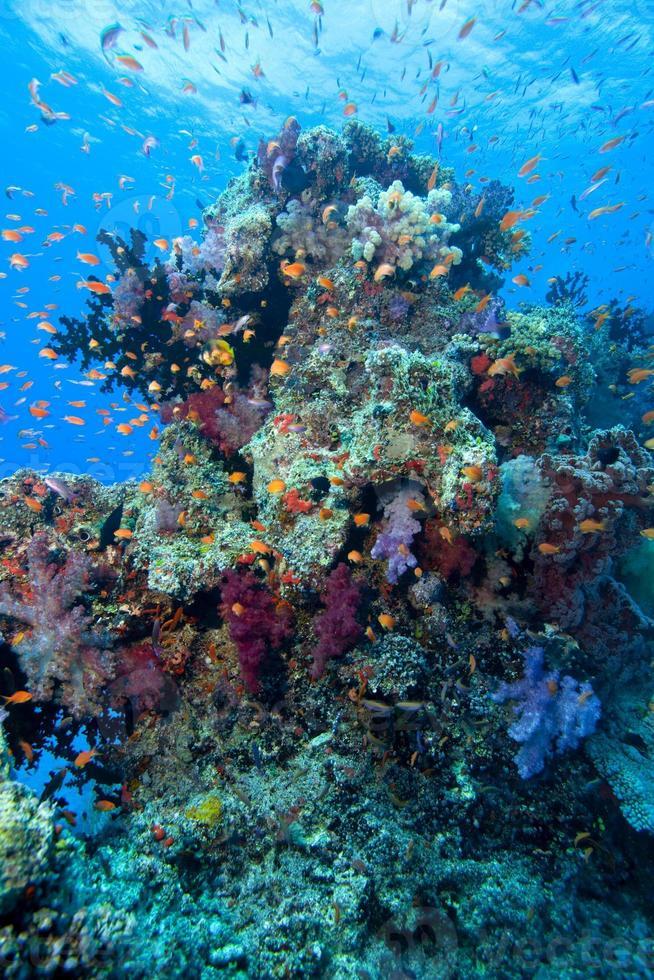 Fiji bajo el agua foto