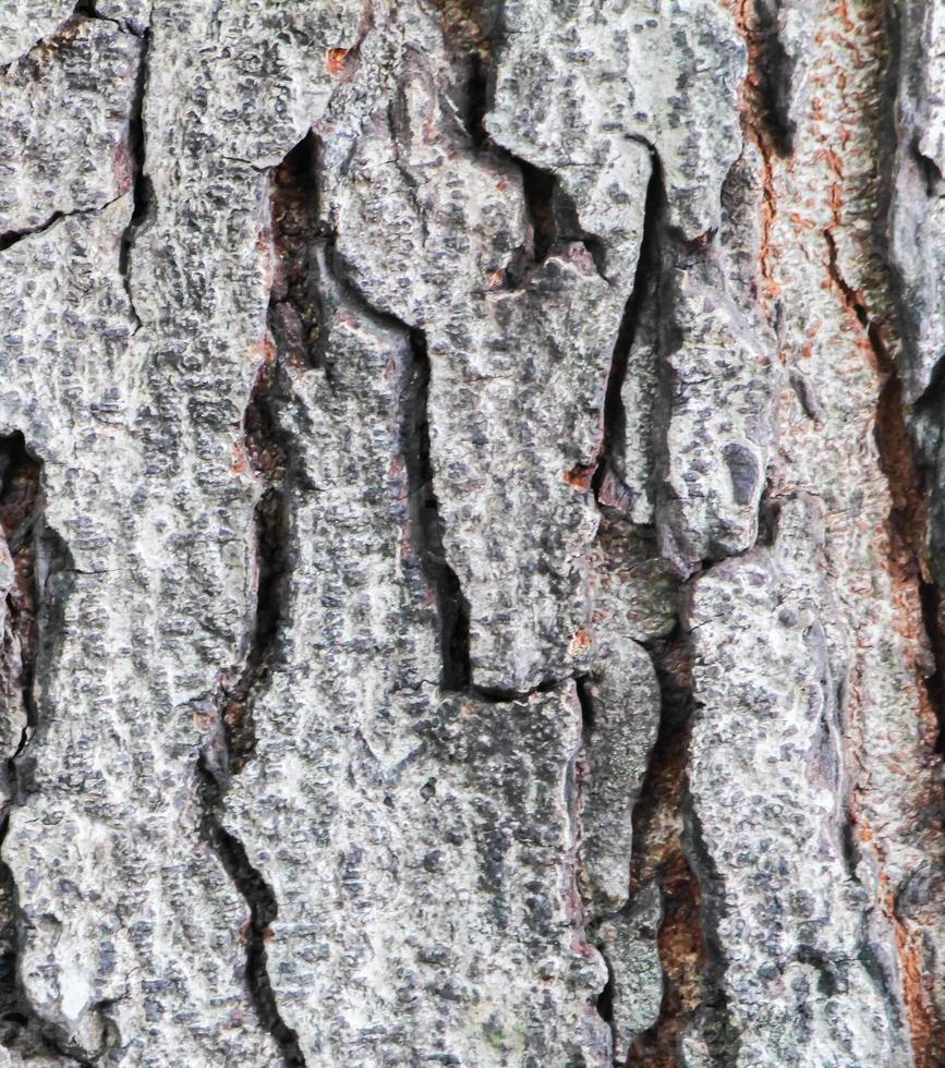 Textured wood photo
