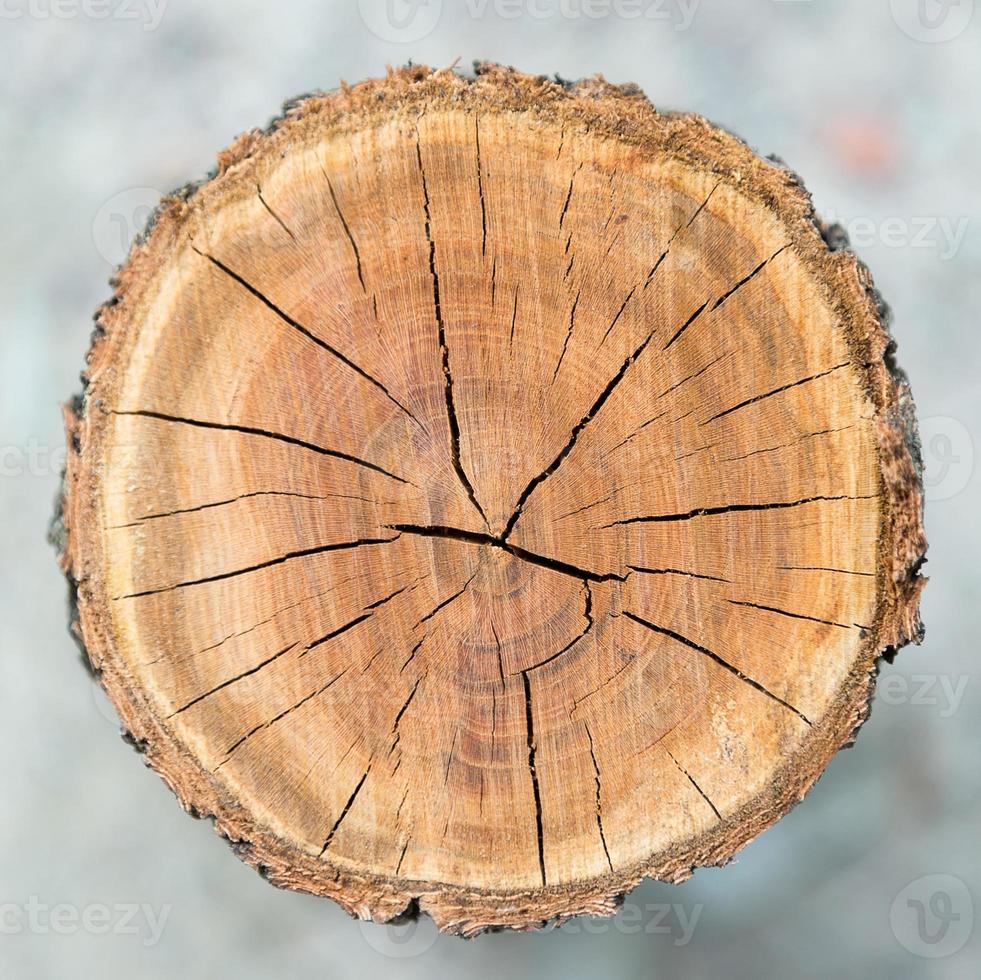 textura de madeira círculo foto