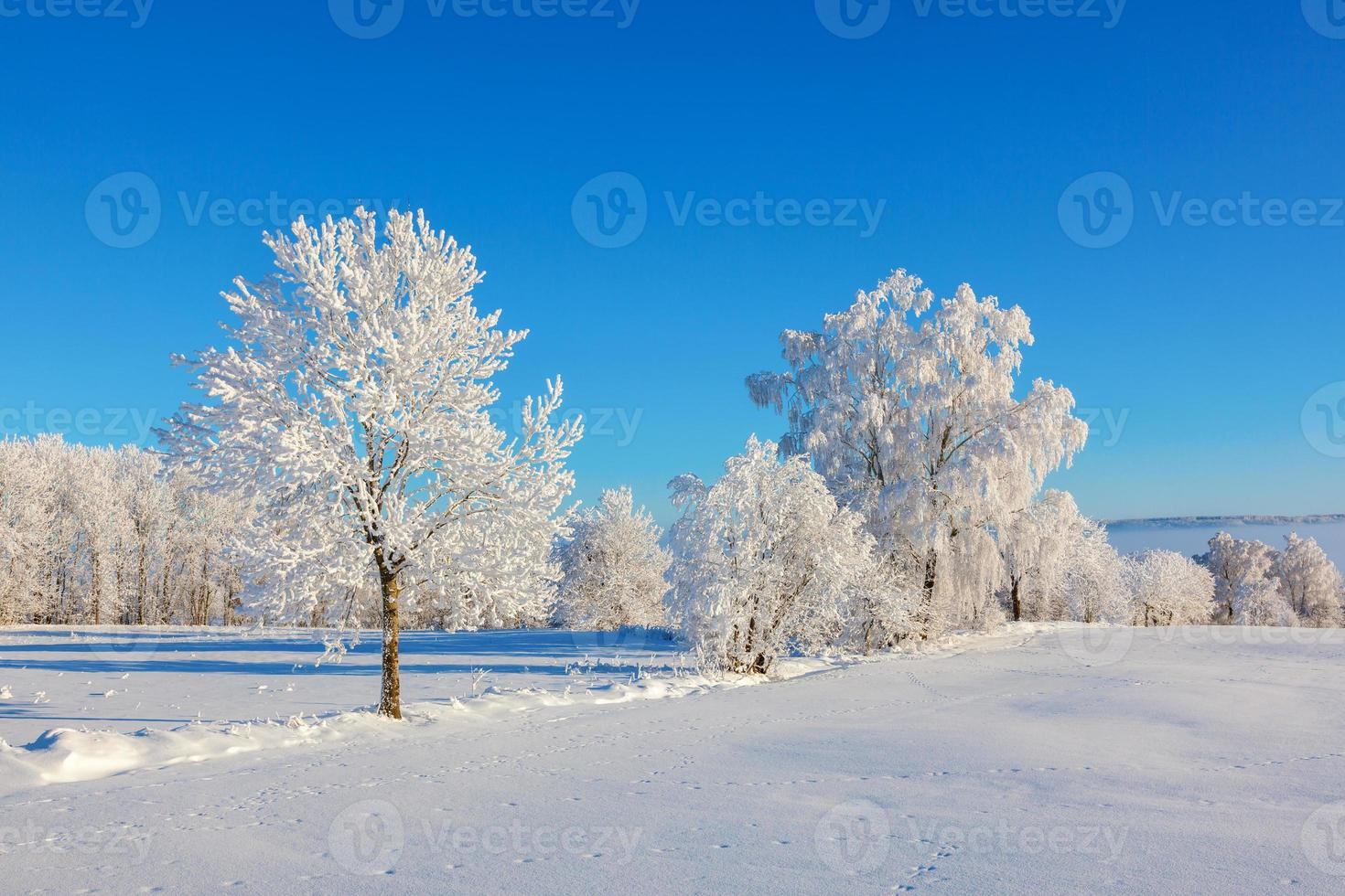 Frost covered trees in snow landscape photo