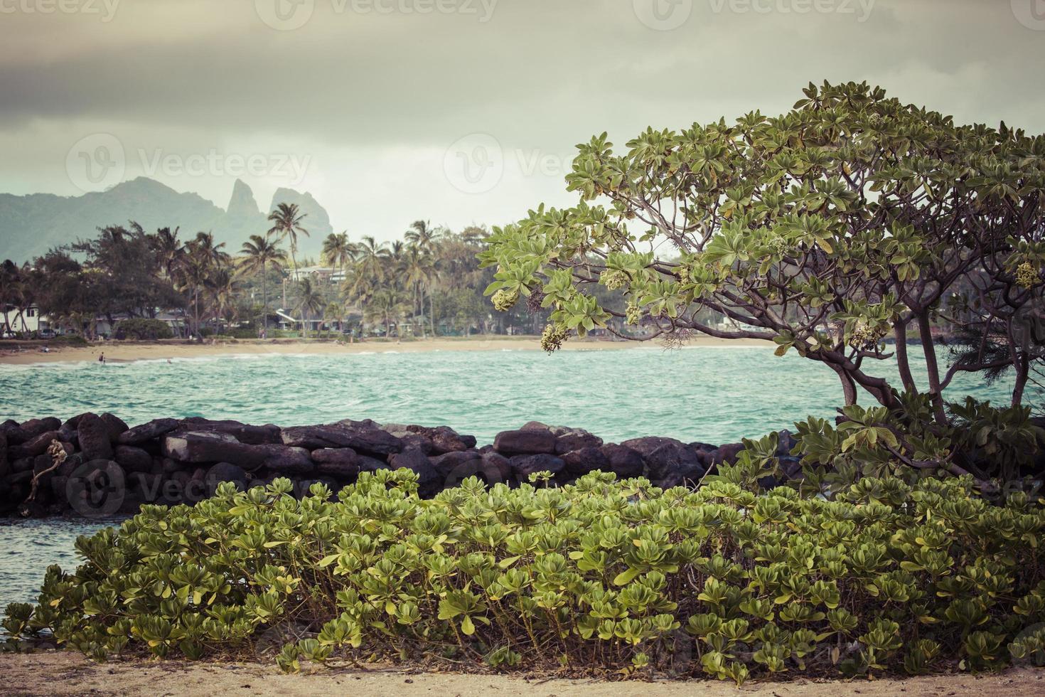 palmera de coco en la playa de arena en kapaa hawaii foto