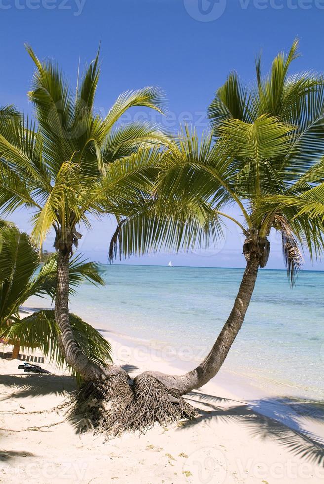 isla de Fiji foto