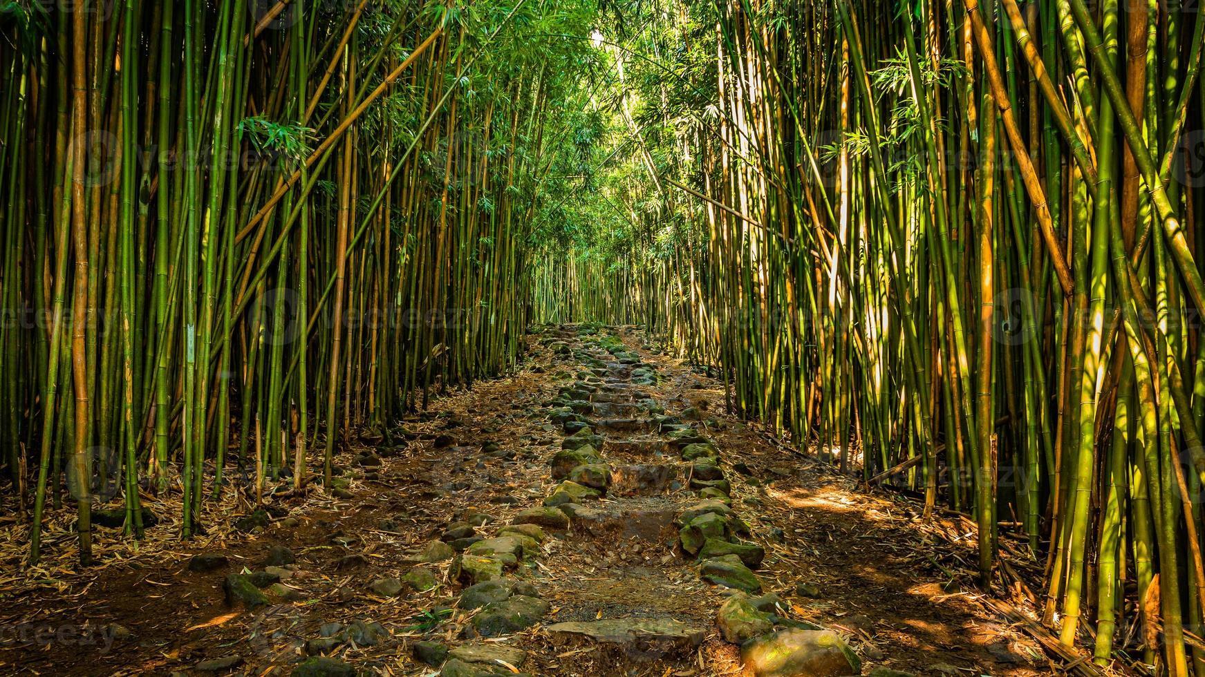 camino a través del bosque de bambú foto