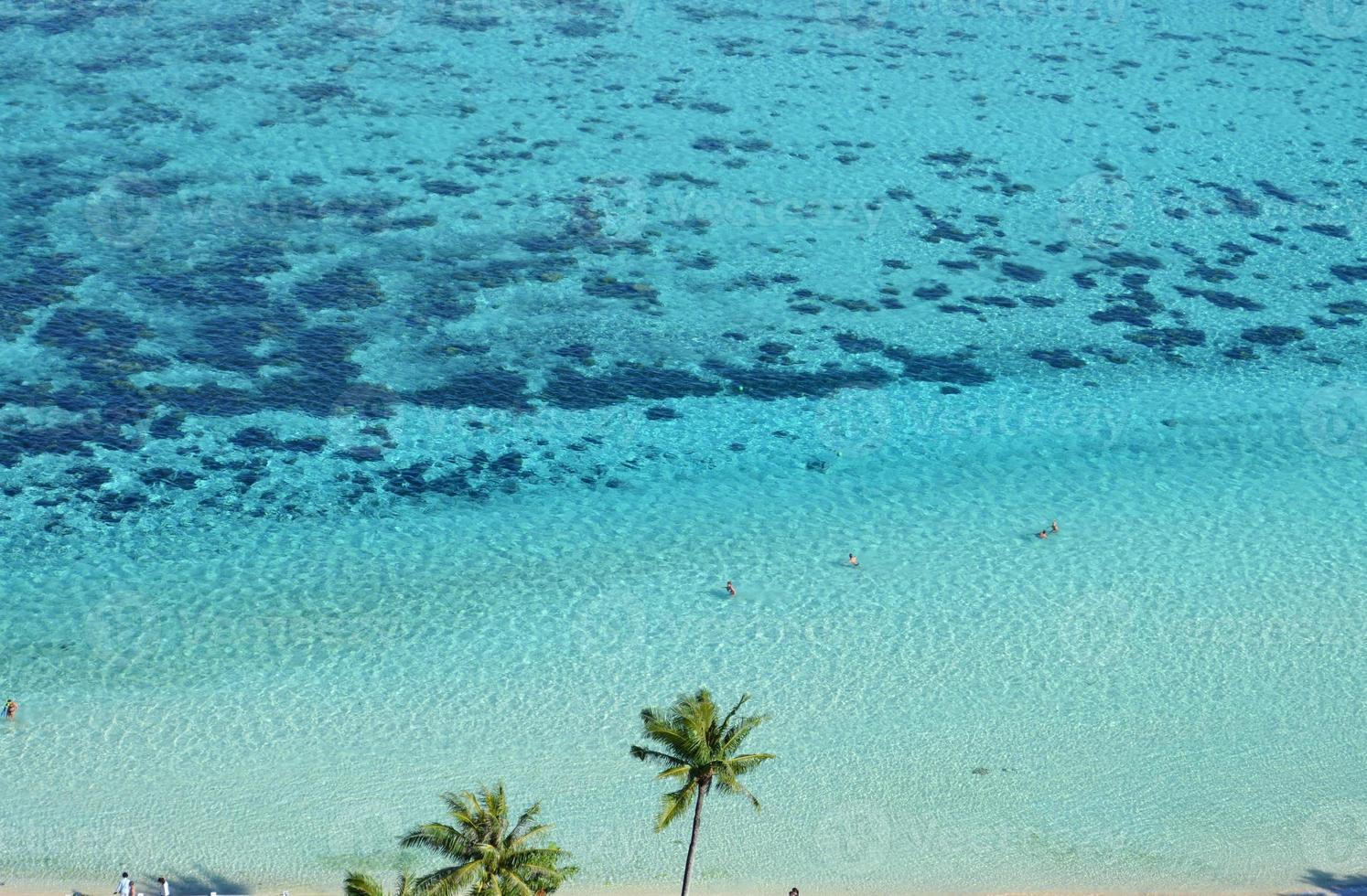 palmeras y un arrecife de coral foto