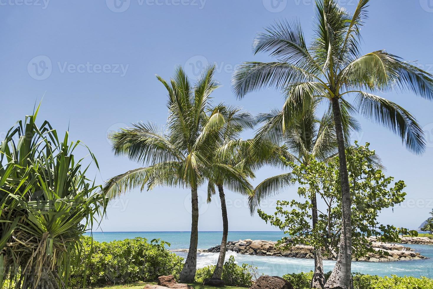 Tropical beach scene photo