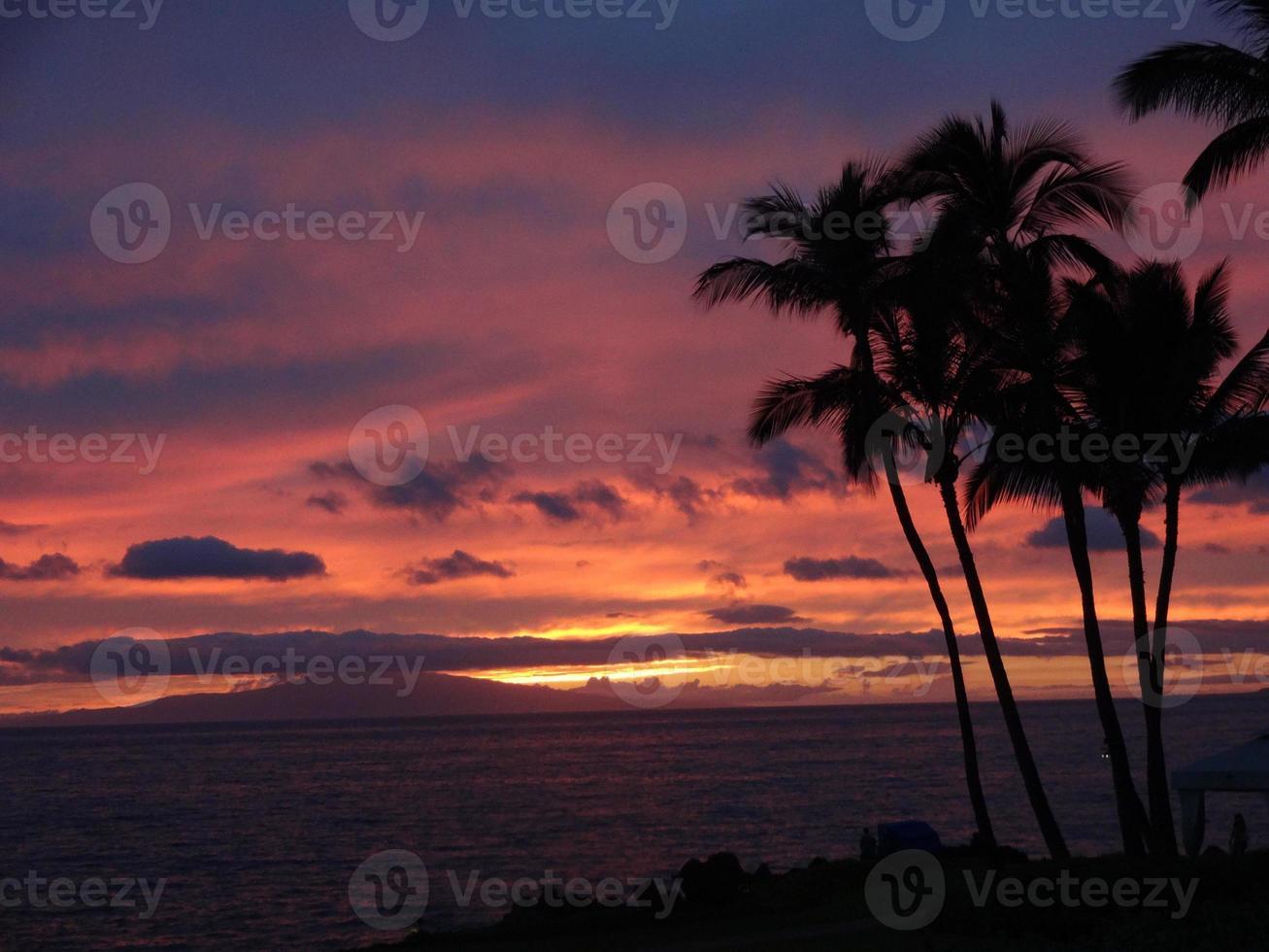 palmeras durante la puesta de sol de maui foto