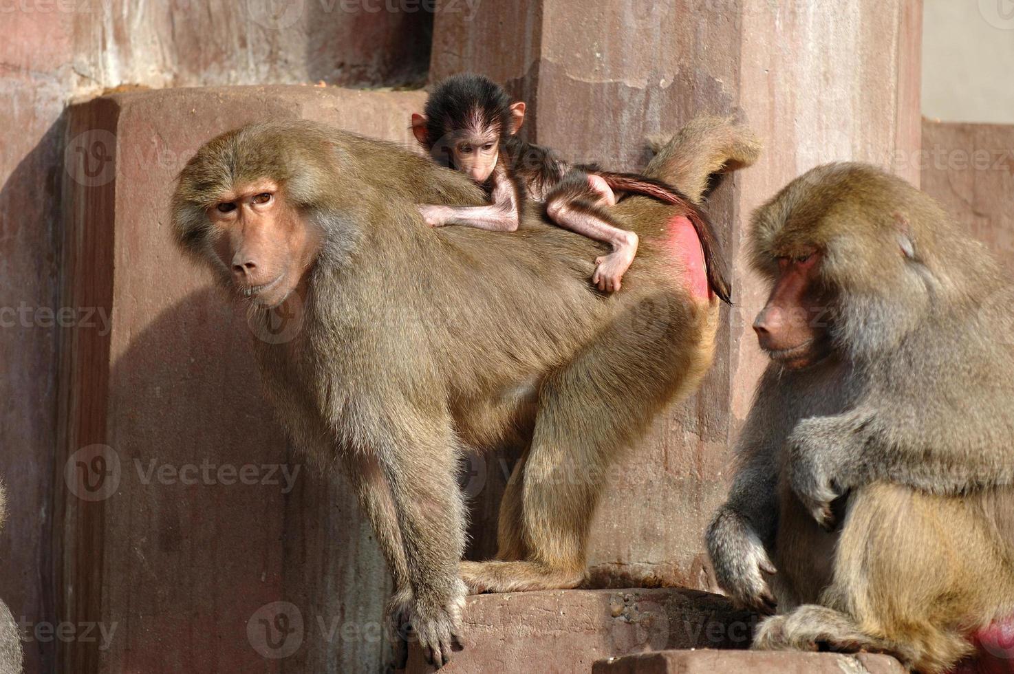 família monge foto