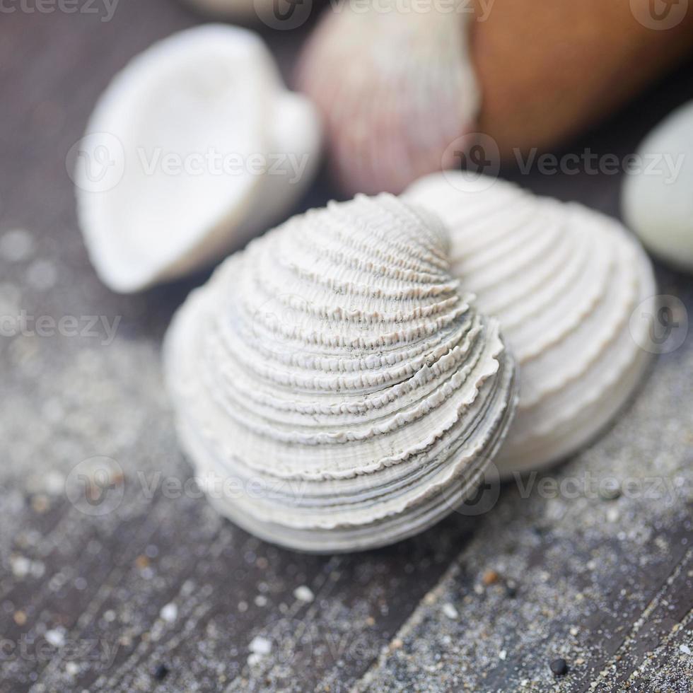 marco de conchas de mar en madera cutre vintage foto
